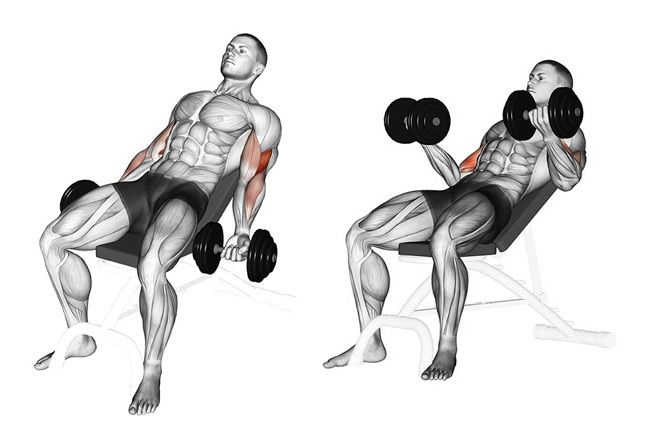 Incline Dumbbell Curl